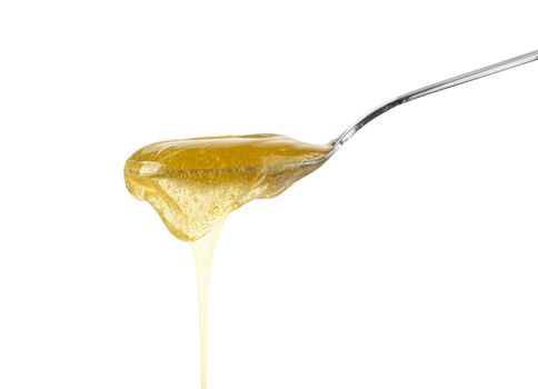 Close up fresh thick fluid acacia honey pouring and flowing from metal spoon isolated on white background with copy space, low angle side view