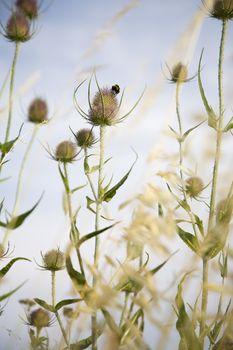 Photo of Plants in field