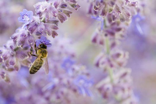 Photo of Bee on purple flower