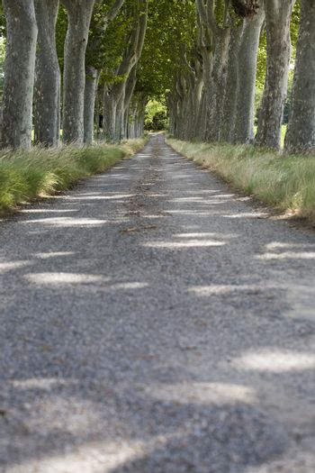 Photo of Tree lined path