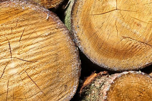 Fresh sawed wood in a close up view. Detailed texture of annual