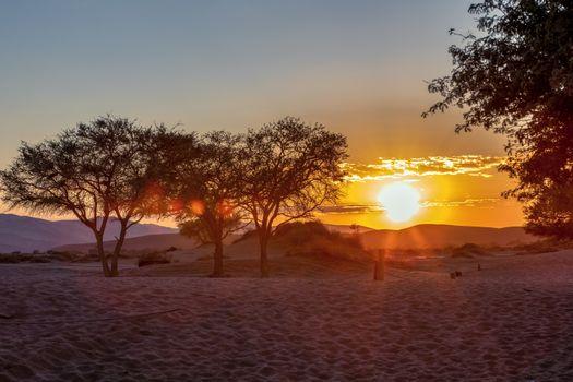 beautiful sunrise in hidden Dead Vlei in Namib desert, rising morning sun, Namibia, Africa wilderness landscape