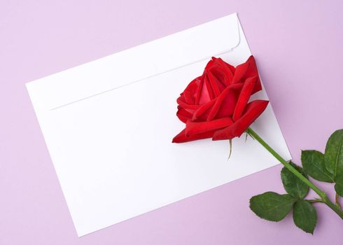 red blooming rose and white paper envelope on a purple background, top view