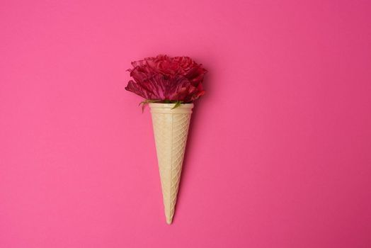 blooming red rose in a waffle cone on a pink background, top view