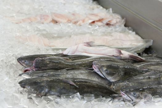 Close up of fish in ice