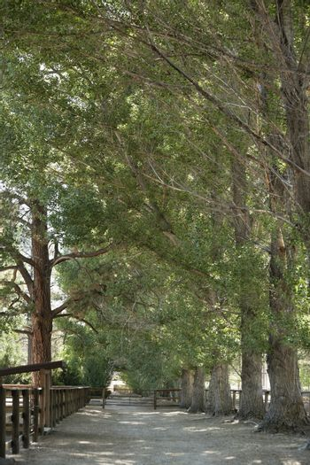 View of narrow and quite lane amid trees