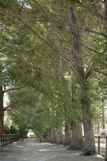 View of narrow country lane amid trees
