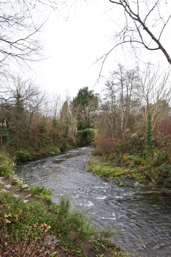 Stream with trees in Kenmare, Ireland