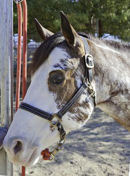 Close-up of horse looking at camera