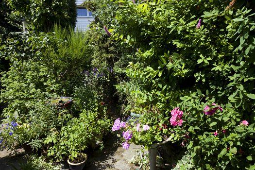 Fresh green plants growing in backyard