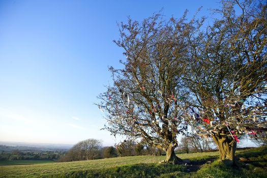 Fairy tree at Hill of Tara, Ireland