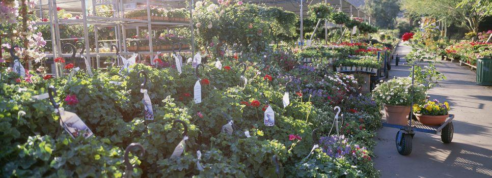 Flower plants growing in greenhouse
