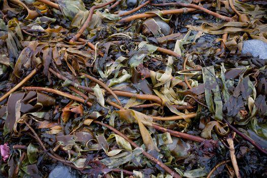 Seaweed amongst rocks on beach