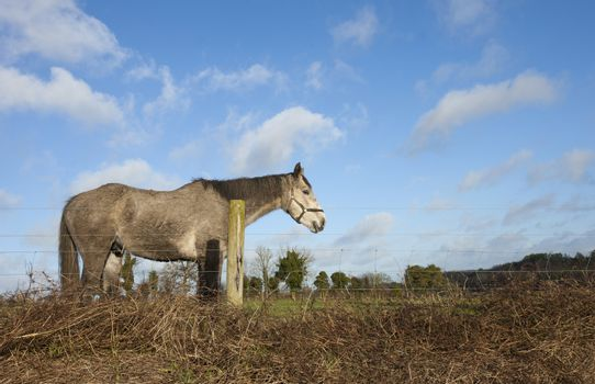 Horse standing in meadow behind fence