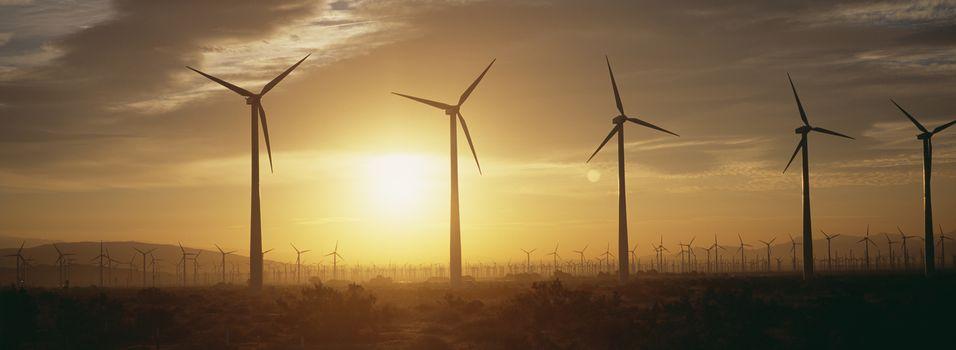Wind farm turbines at dawn