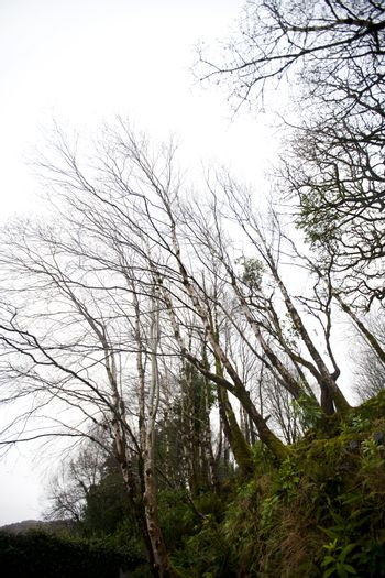Looking up to trees in Killarney National Park