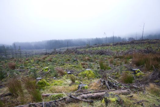 Tree stumps in front of forest