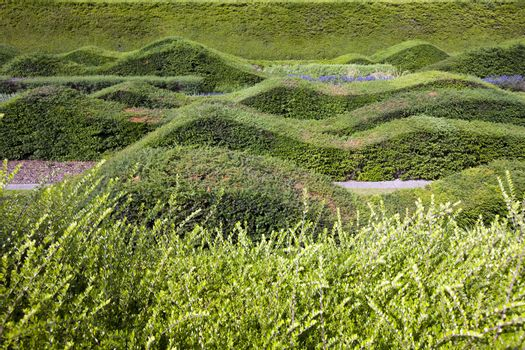 Close up view of beautifully designed hedges