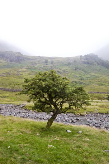 Tree by small stream at countryside