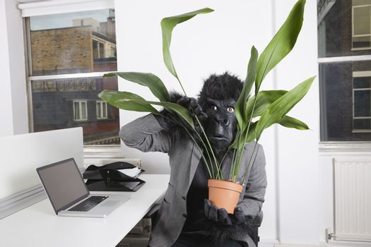 Frightful young man in gorilla mask looking through pot plant