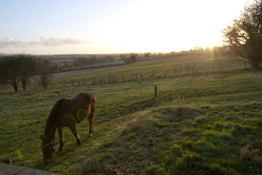 Horse grazing with sunset