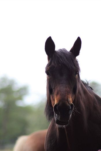 A portrait of a brown horse