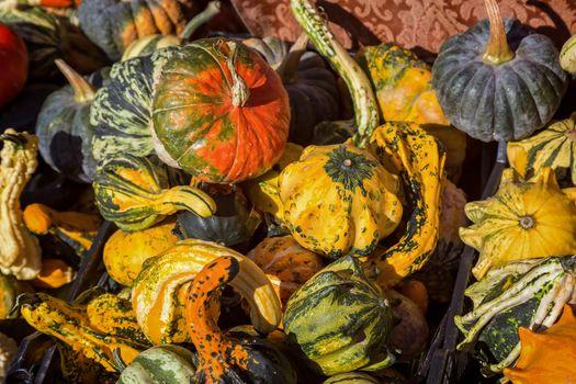Different kinds of pumpkins in sunshine