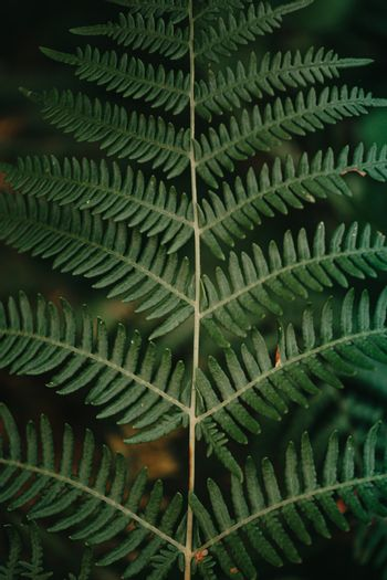A close up of a fern from above