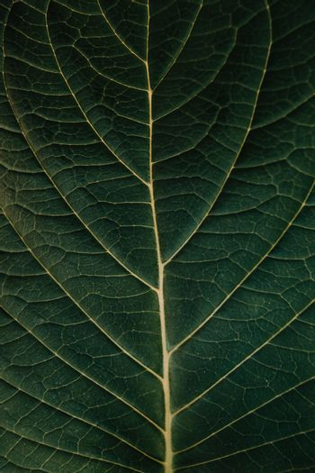 A mock up of the pattern in a leave of a big plant