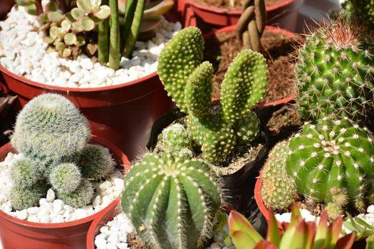 Green cactus plants lucky charm