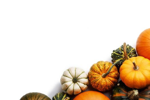 Many orange pumpkins isolated on white background , Halloween concept , top view with copy space