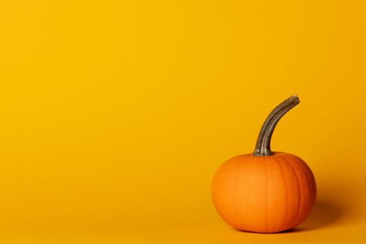 Holiday halloween background with pumpkin on orange, copy space for text