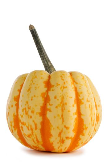 One small striped yellow pumpkin isolated on white background , Halloween concept