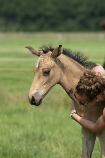 Young woman cuddling with her best friend, falcon color stallion foal, sharing love and mutual affection.