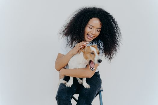 Joyful African American woman plays with pedigree dog, dressed in casual wear, petting favourite pet, isolated over white background, sits on chair. Positive human expressions. Friendship concept