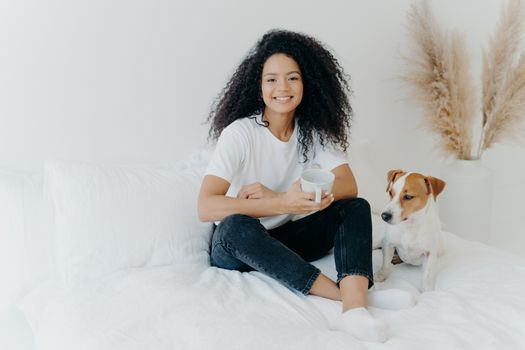 Glad dark skinned Afro American female feels relaxed, poses in bedroom on comfortable bed with pedigree dog, drinks hot beverage, has morning coffee, smiles happily, enjoys spare time at home.