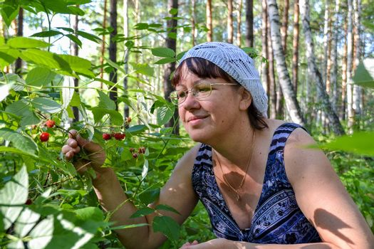 a woman collects forest raspberries on a Sunny summer day