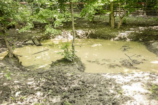 great pool of mud and dirty water