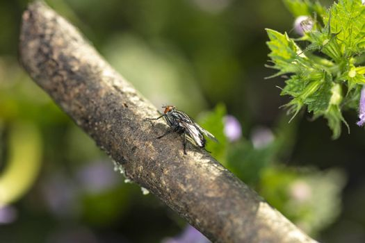 an ordinary fly sits on a branch