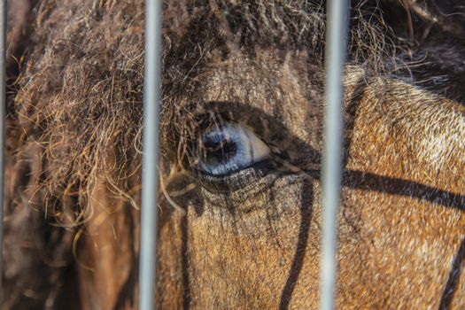 close-up of a horse's blue eye
