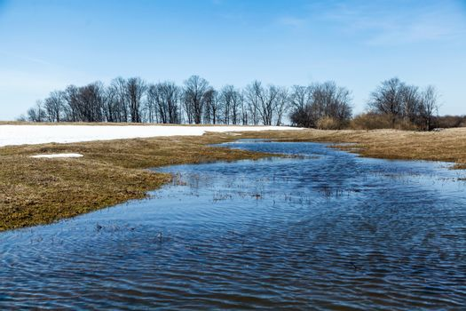 Flooded trees and frozen water in the floodplain of the river at the thaws.
