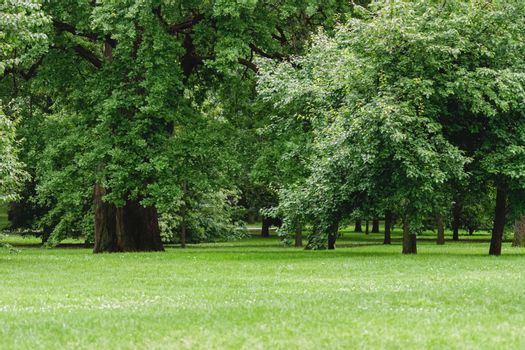 green glade with deciduous trees in city park