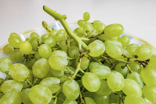 close up bunches of white grapes on a plate