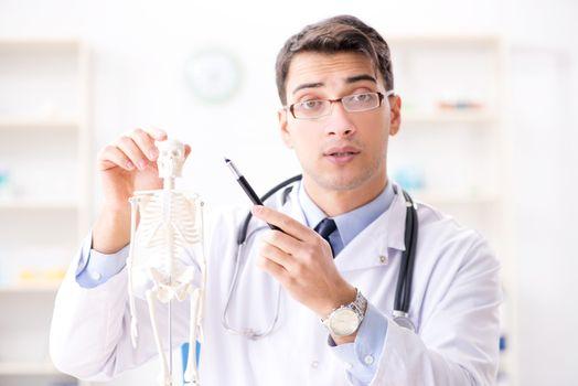 Doctor explaining human body on skeleton