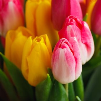 tulip flowers bouquet, close-up view background