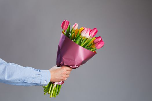 tulip flowers bouquet in hand, gray background