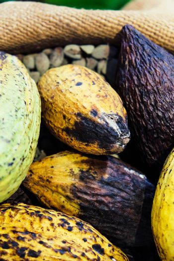 Image of Cocoa pods background
