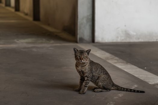 The cat is sitting in abandoned building. Street cat. Selective focus.