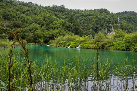 A view of a green lake over reeds with a waterfall in the background, Plitvice Lakes, Croatia