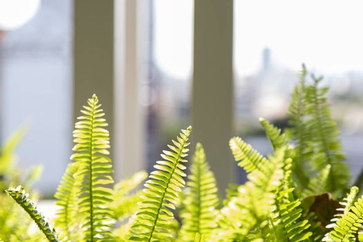 Closeup of fern green leaf with light